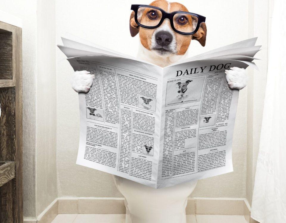 mocha domashnih zhivotnyh Как обнаружить мочу домашних животных?